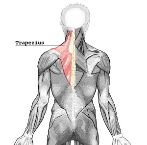 Trapezius muscle pain causes, symptoms, and treatment